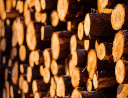 NEWS | Blockchain and wood traceability
