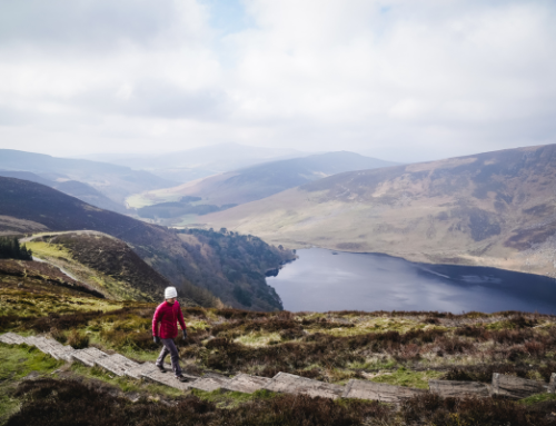 ARTICLE | Ireland's Our Rural Future – a rural digitisation gold standard?